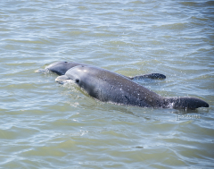 red-boat-tours-sightseeing-dolphins-tours-water-cruises-family-st.augustine-florida-2-dolphin-