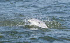 red-boat-tours-sightseeing-dolphins-tours-water-cruises-family-st.augustine-florida-dolphin-close-face