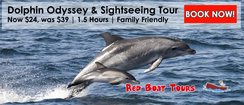 dolphin redboat